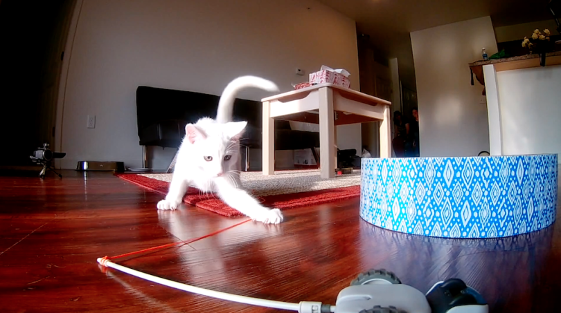What Petronics learned making pet robots for cats